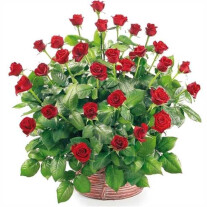 Basket of 30 roses